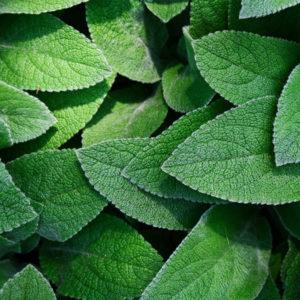 Offres d'emploi biotech chimie du végétal chimie verte